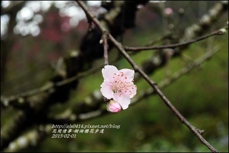 2015-02-樹湖櫻花步道32.jpg