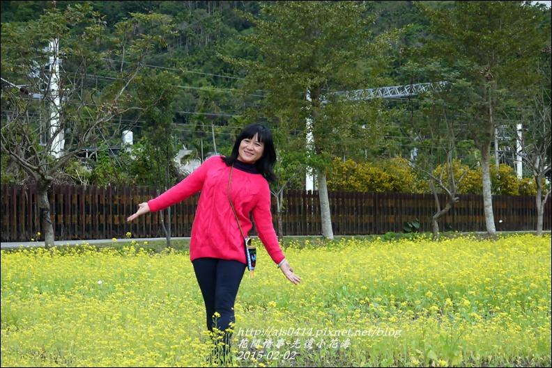 2015-02-光復小花海19.jpg