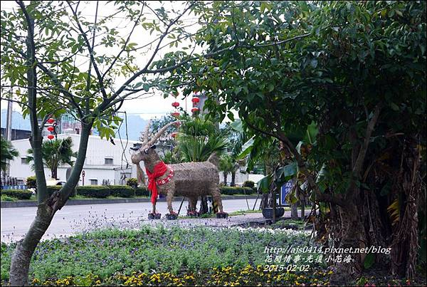 2015-02-光復小花海7.jpg