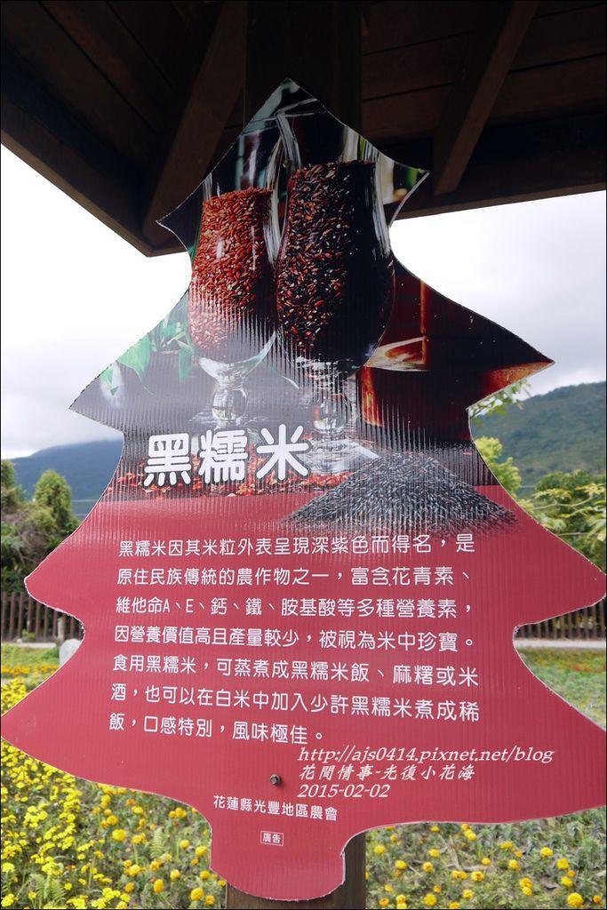 2015-02-光復小花海15.jpg