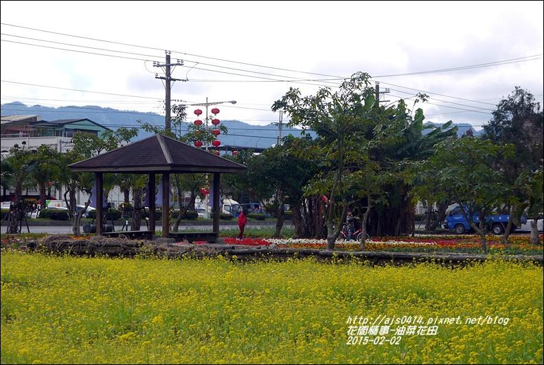 2015-02-油菜花田6.jpg
