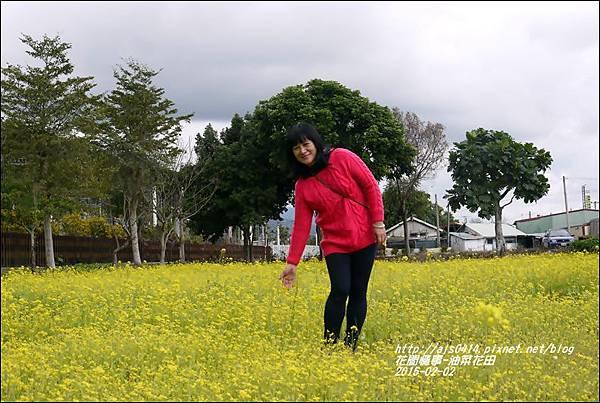 2015-02-油菜花田4.jpg