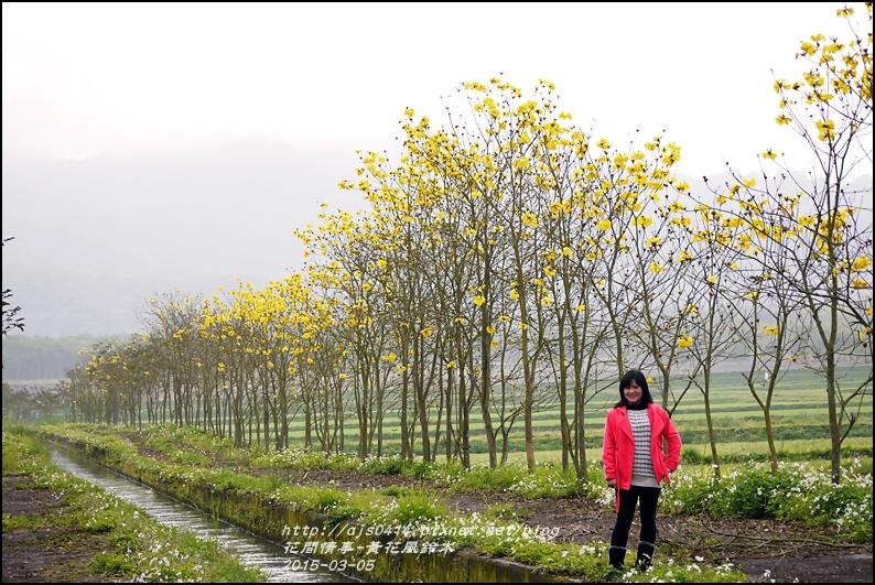 2015-03-黃花風鈴木12.jpg