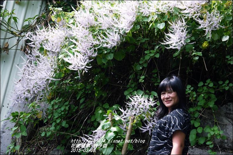 2015-03-到手香13.jpg