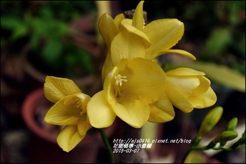 2015-03-小倉蘭6.jpg