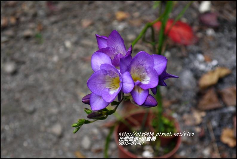 2015-03-小倉蘭12.jpg