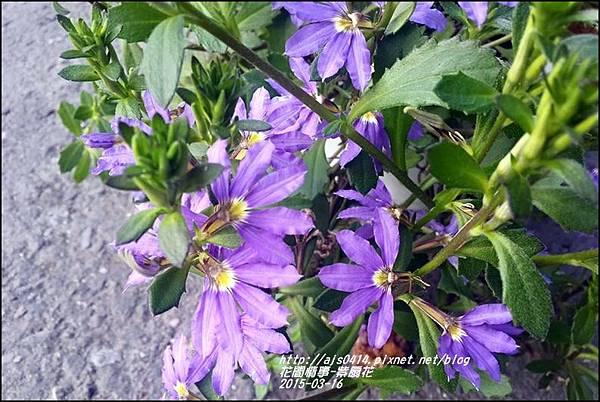 2015-03-紫扇花1.jpg