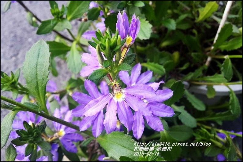2015-03-紫扇花3.jpg