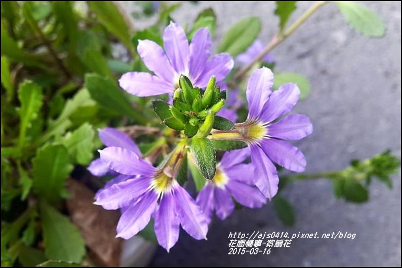 2015-03-紫扇花2.jpg