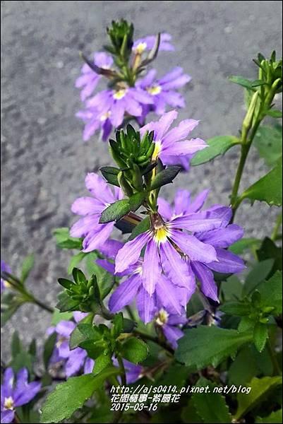 2015-03-紫扇花7.jpg