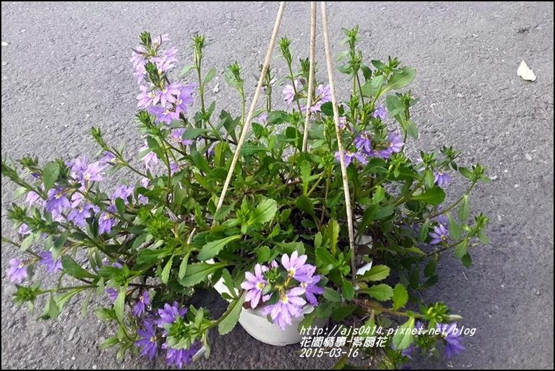 2015-03-紫扇花8.jpg