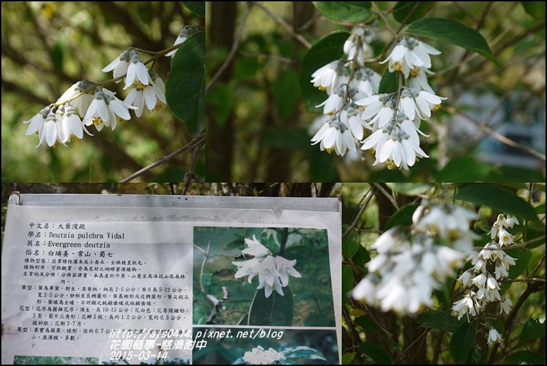 2015-慈大附中18.jpg