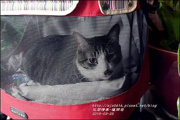 2015-03-蓮雨居1.jpg