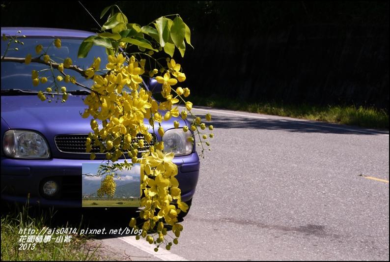 小紫1.jpg