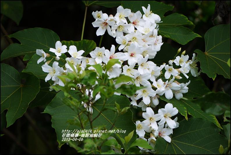 2015-04-後院油桐花9.jpg