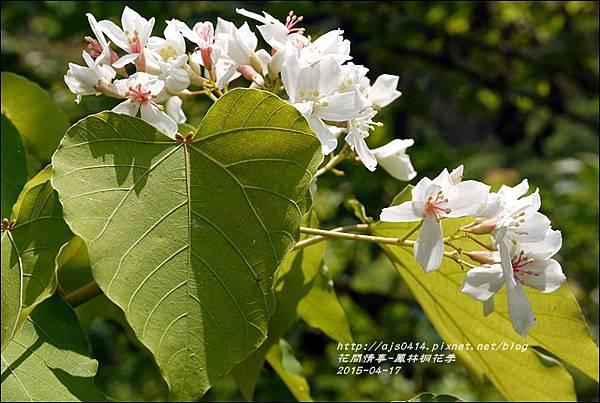 2015-04-鳳林桐花季17.jpg