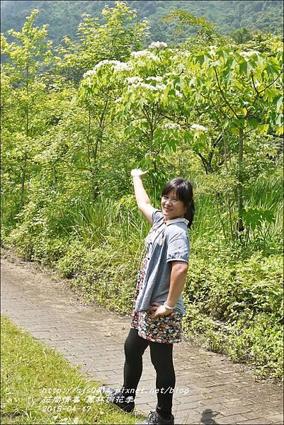 2015-04-鳳林桐花季19.jpg