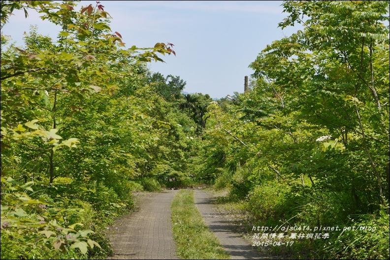 2015-04-鳳林桐花季20.jpg