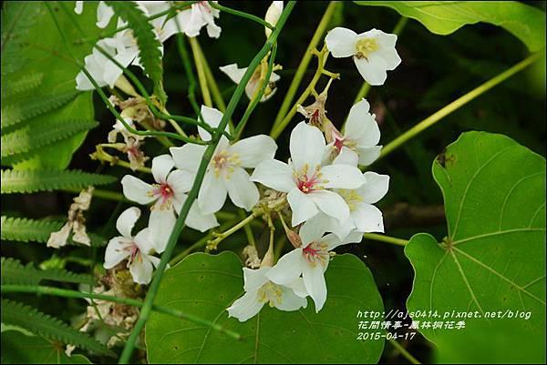 2015-04-鳳林桐花季22.jpg