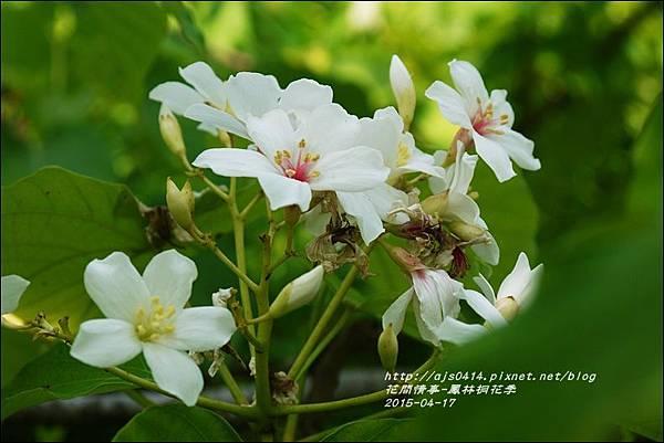 2015-04-鳳林桐花季24.jpg