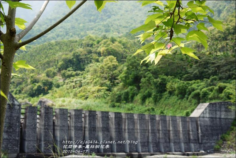2015-04-鳳林桐花季26.jpg