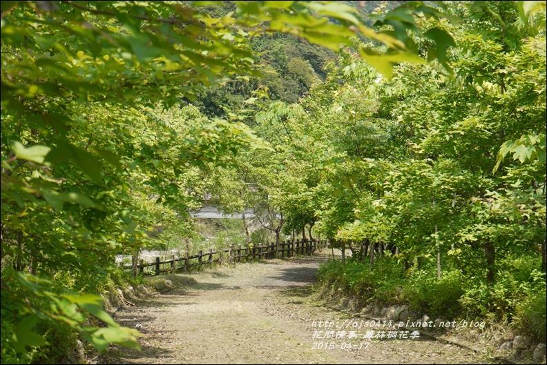 2015-04-鳳林桐花季27.jpg