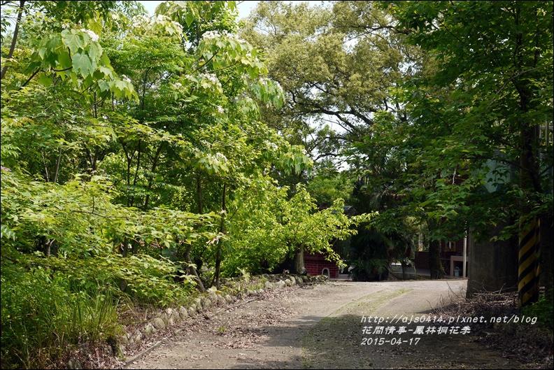 2015-04-鳳林桐花季28.jpg