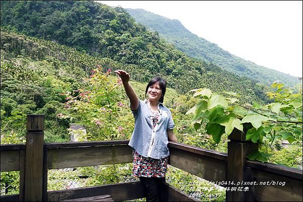 2015-04-鳳林桐花季33.jpg