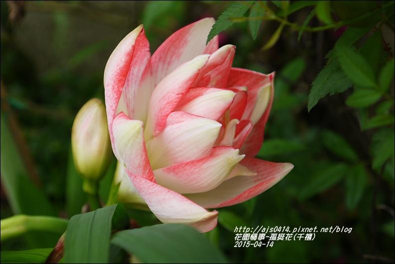 2015-04-孤挺花(千禧)6.jpg