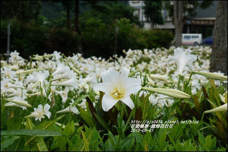 2015-秀姑巒溪泛舟遊客中心(百合花海)10.jpg