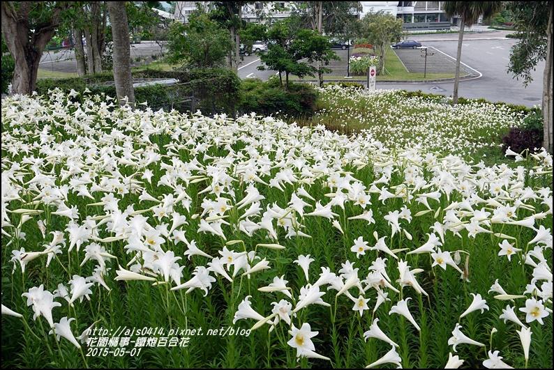 2015-秀姑巒溪泛舟遊客中心(百合花海)29.jpg