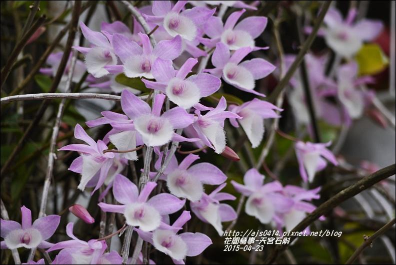 2015-05-天宮石斛2.jpg