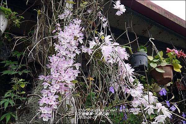 2015-05-天宮石斛8.jpg