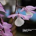2015-05-天宮石斛12.jpg