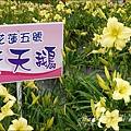 2015-05-嘉德萱草花田(吉安稻香金針花海)4.jpg