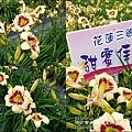 2015-05-嘉德萱草花田(吉安稻香金針花海)5.jpg