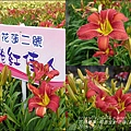 2015-05-嘉德萱草花田(吉安稻香金針花海)6.jpg