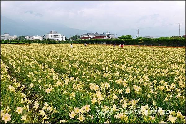 2015-05-嘉德萱草花田(吉安稻香金針花海)20.jpg