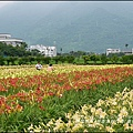 2015-05-嘉德萱草花田(吉安稻香金針花海)25.jpg