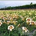 2015-05-嘉德萱草花田(吉安稻香金針花海)26.jpg