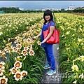 2015-05-嘉德萱草花田(吉安稻香金針花海)28.jpg