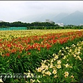 2015-05-嘉德萱草花田(吉安稻香金針花海)38.jpg