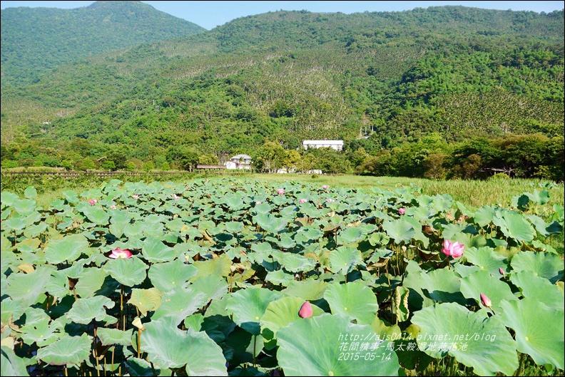 2015-05-馬太鞍濕地荷花池2.jpg