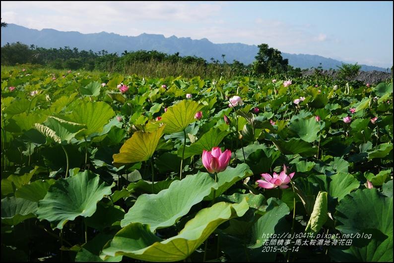 2015-05-馬太鞍濕地荷花池16.jpg