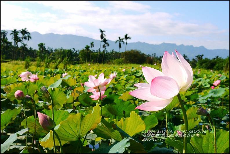 2015-05-馬太鞍濕地荷花池18.jpg
