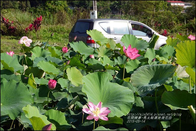 2015-05-馬太鞍濕地荷花池27.jpg