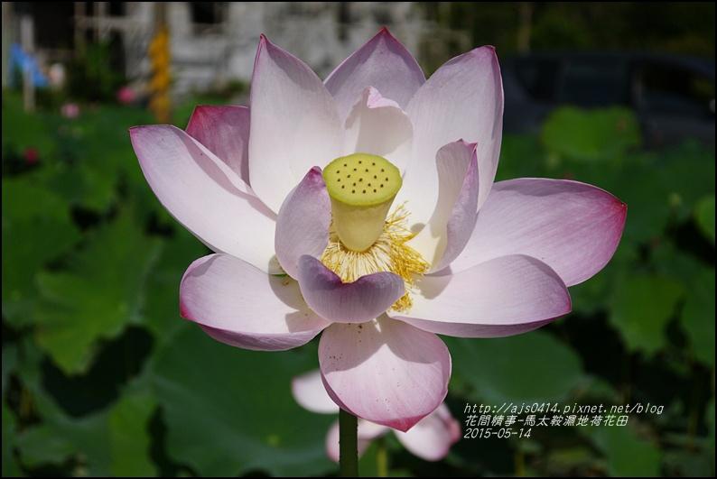 2015-05-馬太鞍濕地荷花池29.jpg