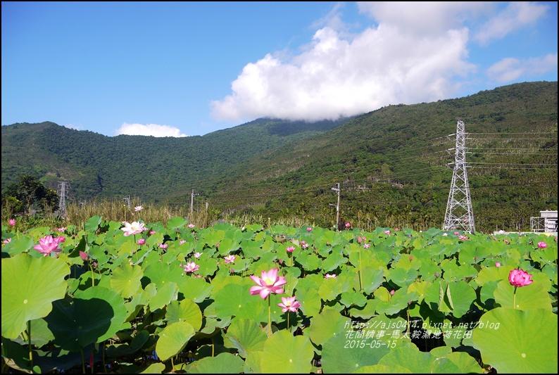 2015-05-馬太鞍濕地荷花池33.jpg