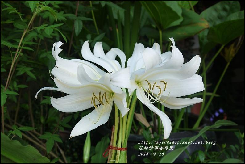 2015-05-香殊蘭1.jpg