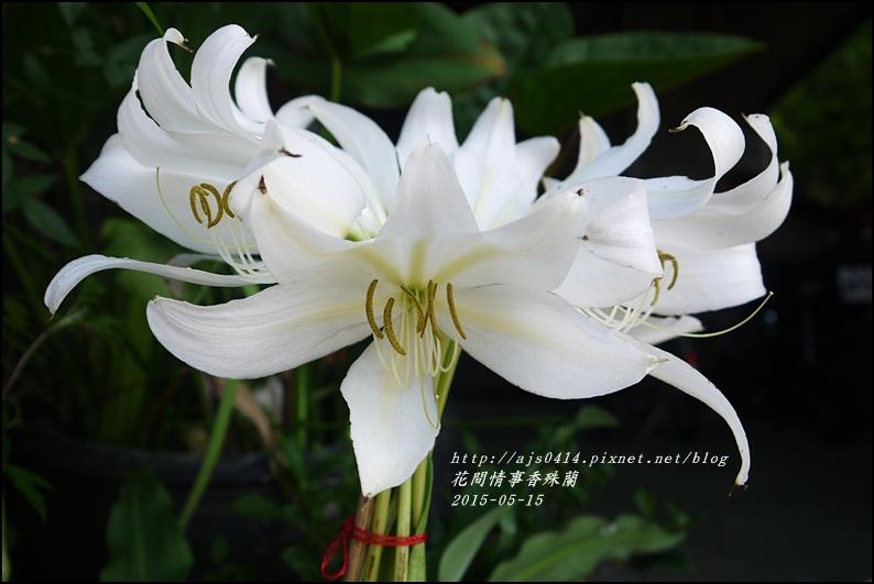2015-05-香殊蘭2.jpg